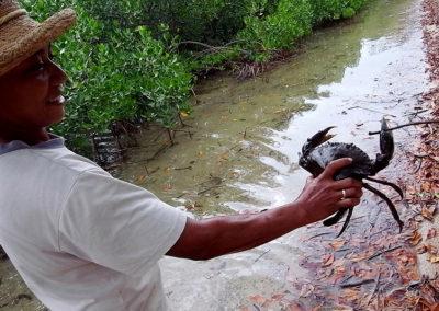 47-mud-crab