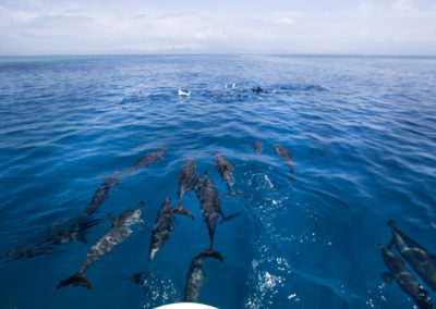 02-dolphins1